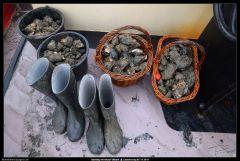 Afbeeldingen/Arrangementen/oesters in manden en laarzen.jpg