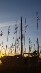 Afbeeldingen/riet groeit boven de mast uit.jpg